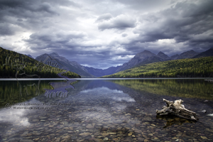 Bowman Lake, clear water, gin clear, rocky bottom, yellow larch trees, autumn, fall colors, Glacier National Park, Montana