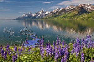 Wildflowers, Jackson Lake, Grand Tetons, Jackson Hole, Wyoming