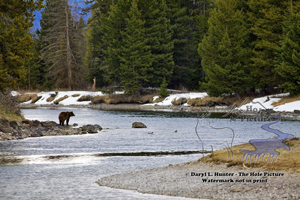 Snake River Grizzly Bear, Grand Teton National Park