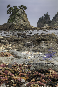 Minokake Rocks, red seawee, low tide, Izu Peninsula, Japan, sea stacks, blue sky, sea shore, ocean,