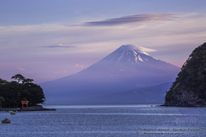 Mount Fuji, Heda Port, fishing harbor, sunrise, pink sky, torii gate, Izu peninsula, Japan
