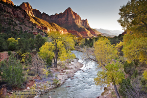 The Watchman, autumn, fall colors, virgin River, sunset, evening light, southwest, Zion National Park, yellow cottonwood, springdale, Utah