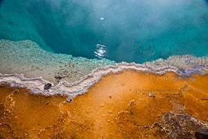 Black Pool, Yellowstone National Park, detail, orange bacteria, blue water,, juxtaposition, thermophile, bacteria, biology, geology, volcano, hot spring, west thumb geyser basin,