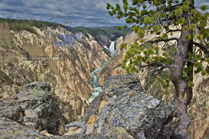 Grand Canyon of the Yellowstone River and Lower Yellowstone Falls, twisted pine, stormy sky, Royolite, rock, geology