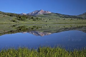 Electric Peak, reflection, Swan Lake, Swan Flats, Yellowstone National Park, peaceful, tranquil, still, forest, reeds, calm water, nature,